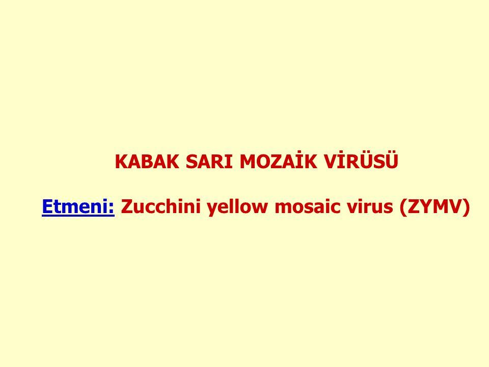 KABAK SARI MOZAİK VİRÜSÜ Etmeni: Zucchini yellow mosaic virus (ZYMV)