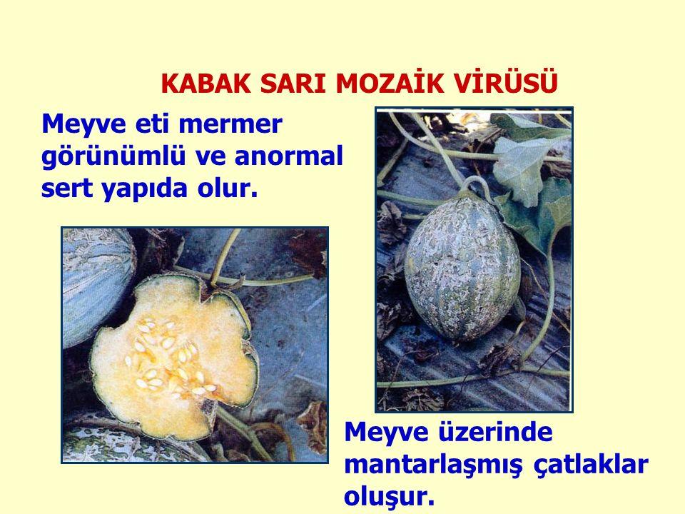 Meyve eti mermer görünümlü ve anormal sert yapıda olur.