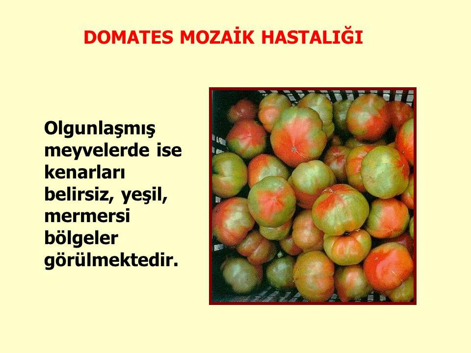 Meyveler normal büyüklükte değildir ve şekilsiz bir görünüm almaktadır.