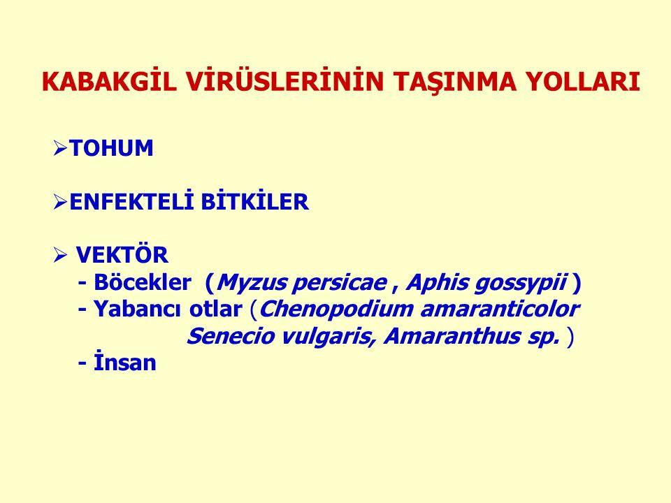 KABAKGİL VİRÜSLERİNİN TAŞINMA YOLLARI  TOHUM  ENFEKTELİ BİTKİLER  VEKTÖR - Böcekler (Myzus persicae, Aphis gossypii ) - Yabancı otlar (Chenopodium amaranticolor Senecio vulgaris, Amaranthus sp.