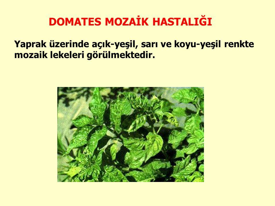 Konukçuları: Tüm sebzeler, tütün, bazı süs bitkileri ve yabancıotlar virüsün konukçusudur.