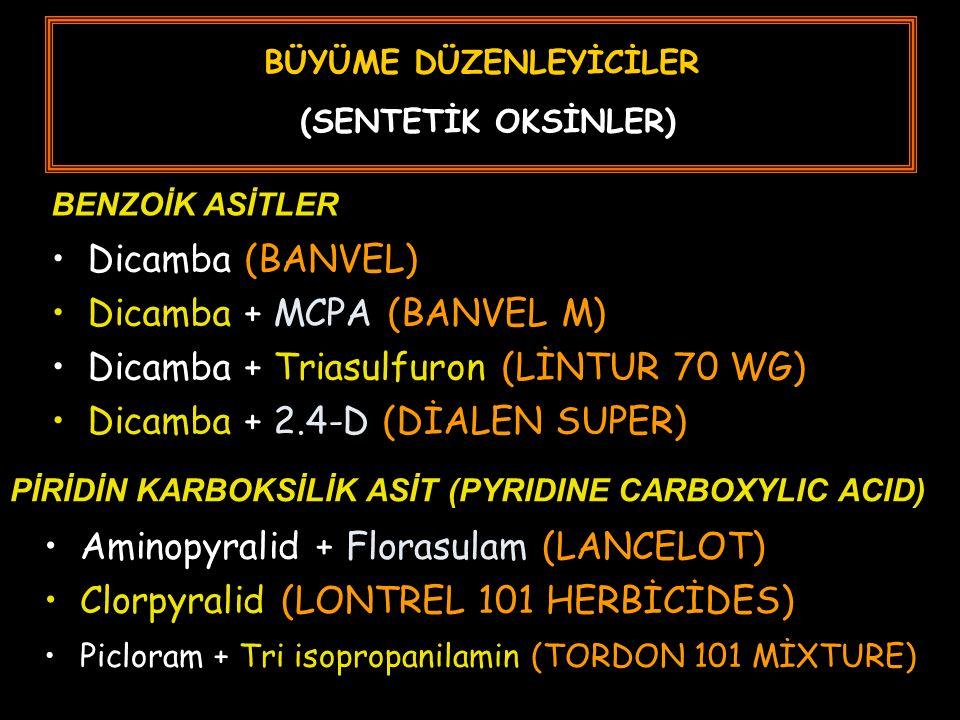 BÜYÜME DÜZENLEYİCİLER (SENTETİK OKSİNLER) Dicamba (BANVEL) Dicamba + MCPA (BANVEL M) Dicamba + Triasulfuron (LİNTUR 70 WG) Dicamba + 2.4-D (DİALEN SUPER) BENZOİK ASİTLER PİRİDİN KARBOKSİLİK ASİT (PYRIDINE CARBOXYLIC ACID) Aminopyralid + Florasulam (LANCELOT) Clorpyralid (LONTREL 101 HERBİCİDES) Picloram + Tri isopropanilamin (TORDON 101 MİXTURE)