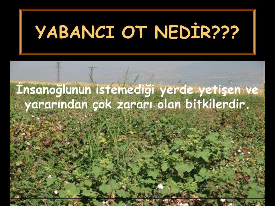 YABANCI OT NEDİR??? İnsanoğlunun istemediği yerde yetişen ve yararından çok zararı olan bitkilerdir.