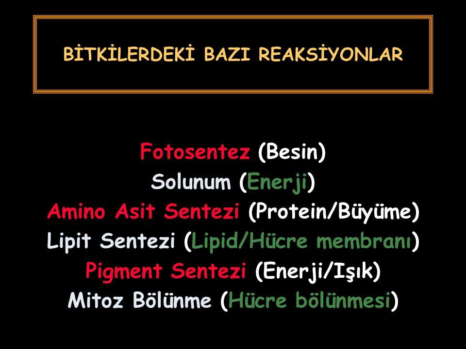 BİTKİLERDEKİ BAZI REAKSİYONLAR Fotosentez (Besin) Solunum (Enerji) Amino Asit Sentezi (Protein/Büyüme) Lipit Sentezi (Lipid/Hücre membranı) Pigment Se
