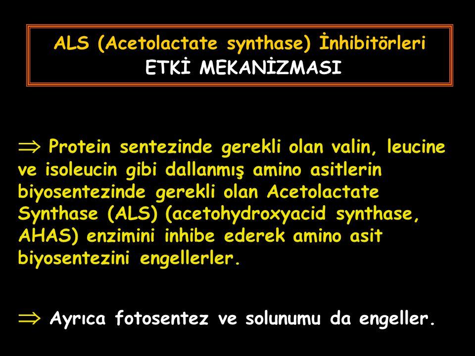 ALS (Acetolactate synthase) İnhibitörleri ETKİ MEKANİZMASI  Protein sentezinde gerekli olan valin, leucine ve isoleucin gibi dallanmış amino asitlerin biyosentezinde gerekli olan Acetolactate Synthase (ALS) (acetohydroxyacid synthase, AHAS) enzimini inhibe ederek amino asit biyosentezini engellerler.