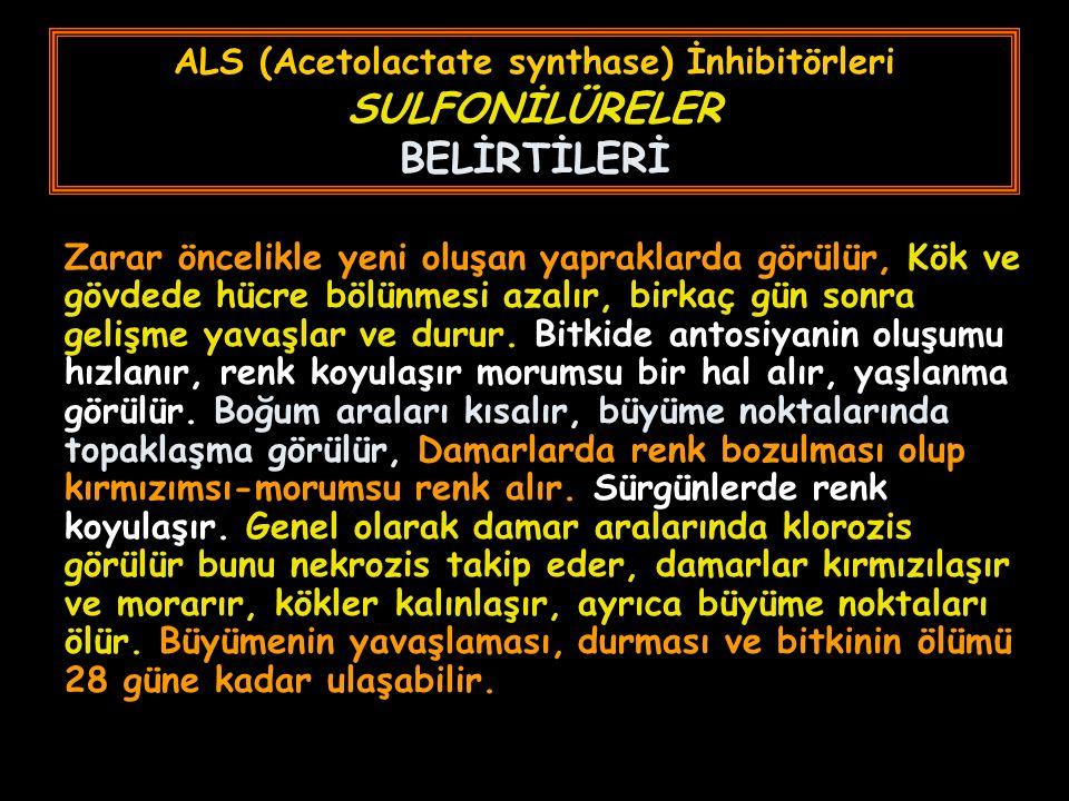 ALS (Acetolactate synthase) İnhibitörleri SULFONİLÜRELER BELİRTİLERİ Zarar öncelikle yeni oluşan yapraklarda görülür, Kök ve gövdede hücre bölünmesi a