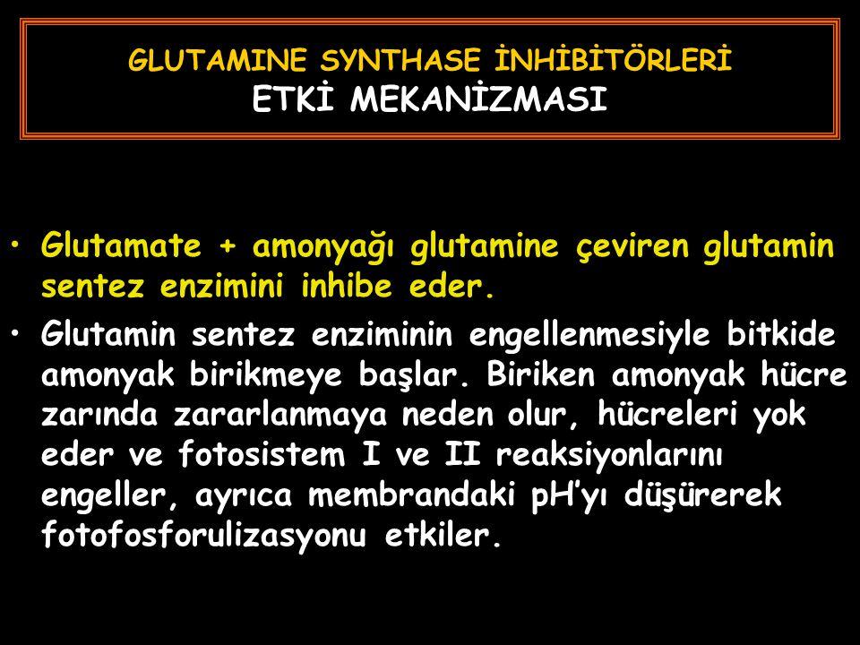 GLUTAMINE SYNTHASE İNHİBİTÖRLERİ ETKİ MEKANİZMASI Glutamate + amonyağı glutamine çeviren glutamin sentez enzimini inhibe eder. Glutamin sentez enzimin