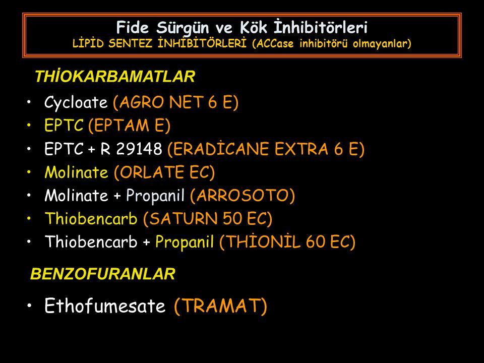 Fide Sürgün ve Kök İnhibitörleri LİPİD SENTEZ İNHİBİTÖRLERİ (ACCase inhibitörü olmayanlar) Cycloate (AGRO NET 6 E) EPTC (EPTAM E) EPTC + R 29148 (ERADİCANE EXTRA 6 E) Molinate (ORLATE EC) Molinate + Propanil (ARROSOTO) Thiobencarb (SATURN 50 EC) Thiobencarb + Propanil (THİONİL 60 EC) THİOKARBAMATLAR BENZOFURANLAR Ethofumesate (TRAMAT)