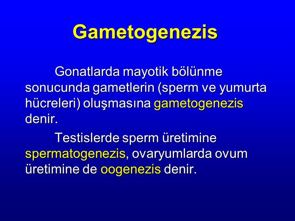 Gametogenezis Gonatlarda mayotik bölünme sonucunda gametlerin (sperm ve yumurta hücreleri) oluşmasına gametogenezis denir. Testislerde sperm üretimine