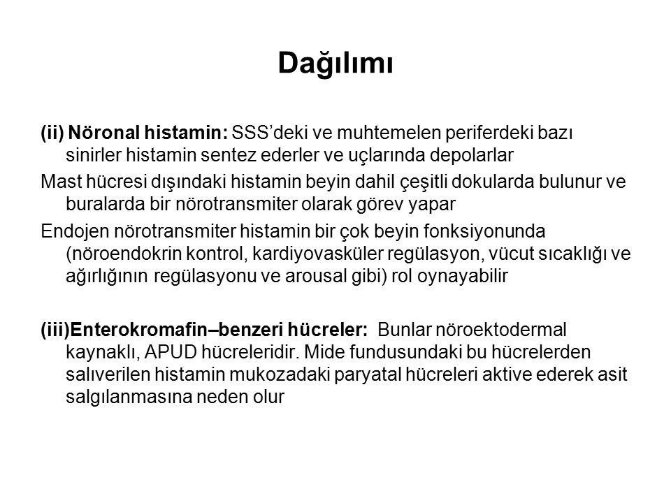 Histamin'in Salıverilmesi Mast hücrelerindeki histamin çeşitli mekanizmalar aracılığıyla salıverilir: A.