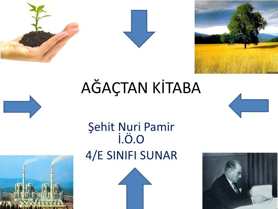 Tohumdan Ağaca Çiftçi tohumu eker bir zaman sonra büyür ve ağaç olur.