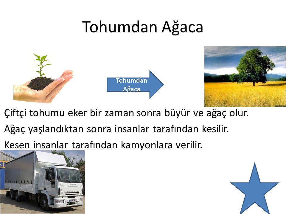 Ağaçtan Fabrikalara Kamyonlar ağaç parçalarını fabrikalara götürür.