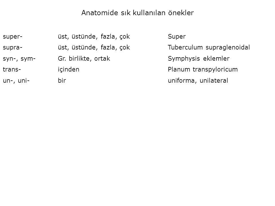 Anatomide sık kullanılan önekler super-üst, üstünde, fazla, çokSuper supra-üst, üstünde, fazla, çokTuberculum supraglenoidal syn-, sym-Gr.