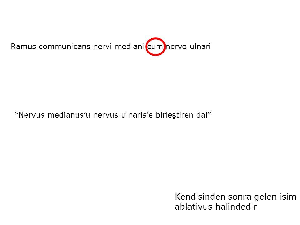 Ramus communicans nervi mediani cum nervo ulnari Nervus medianus'u nervus ulnaris'e birleştiren dal Kendisinden sonra gelen isim ablativus halindedir