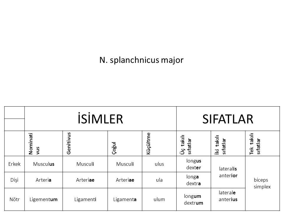 N. splanchnicus major İSİMLERSIFATLAR Nominati vus Genitivus Çoğul Küçültme Üç takılı sıfatlar İki takılı sıfatlar Tek takılı sıfatlar ErkekMusculusMu