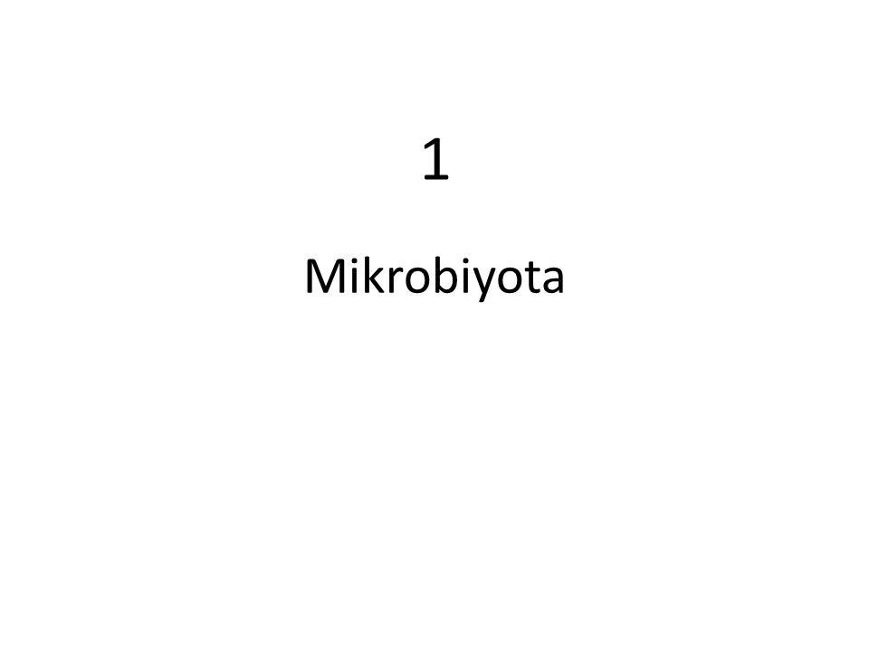 Mikrobiyota 1