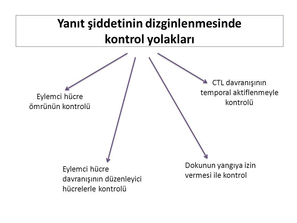 Yanıt şiddetinin dizginlenmesinde kontrol yolakları Dokunun yangıya izin vermesi ile kontrol Eylemci hücre davranışının düzenleyici hücrelerle kontrolü Eylemci hücre ömrünün kontrolü CTL davranışının temporal aktiflenmeyle kontrolü