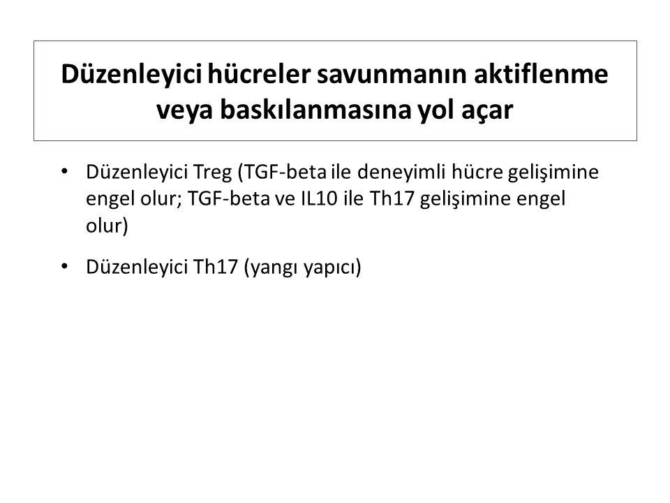 Düzenleyici hücreler savunmanın aktiflenme veya baskılanmasına yol açar Düzenleyici Treg (TGF-beta ile deneyimli hücre gelişimine engel olur; TGF-beta ve IL10 ile Th17 gelişimine engel olur) Düzenleyici Th17 (yangı yapıcı)