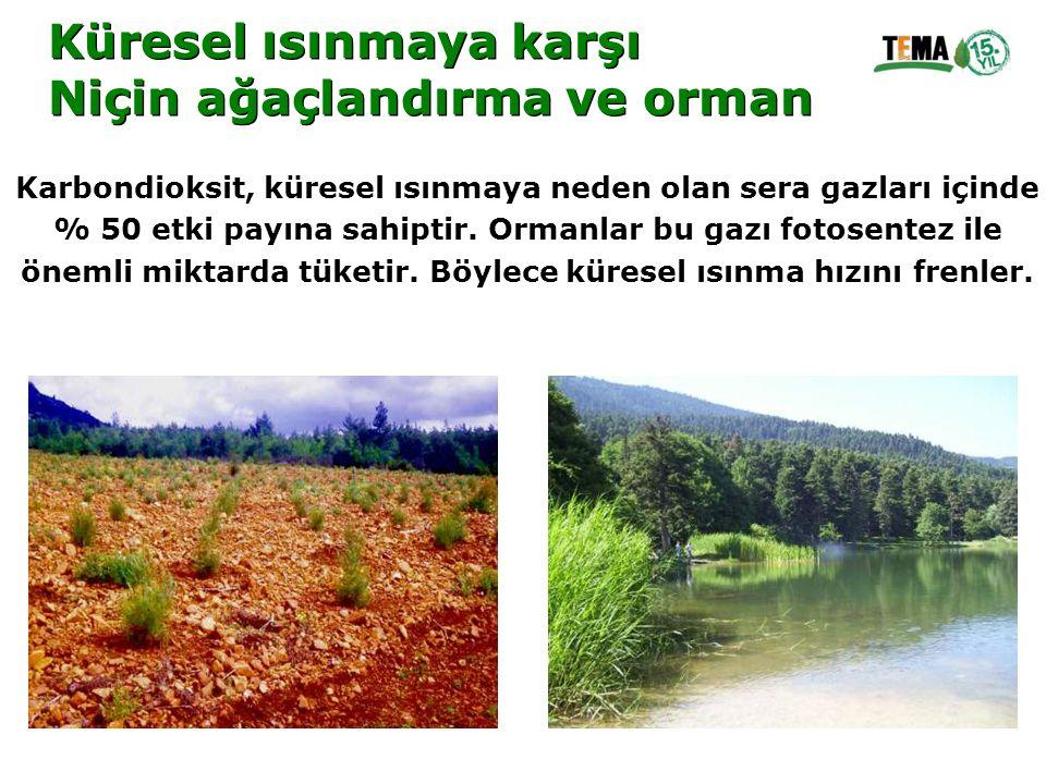 Küresel ısınmaya karşı Niçin ağaçlandırma ve orman Küresel ısınmaya karşı Niçin ağaçlandırma ve orman Karbondioksit, küresel ısınmaya neden olan sera
