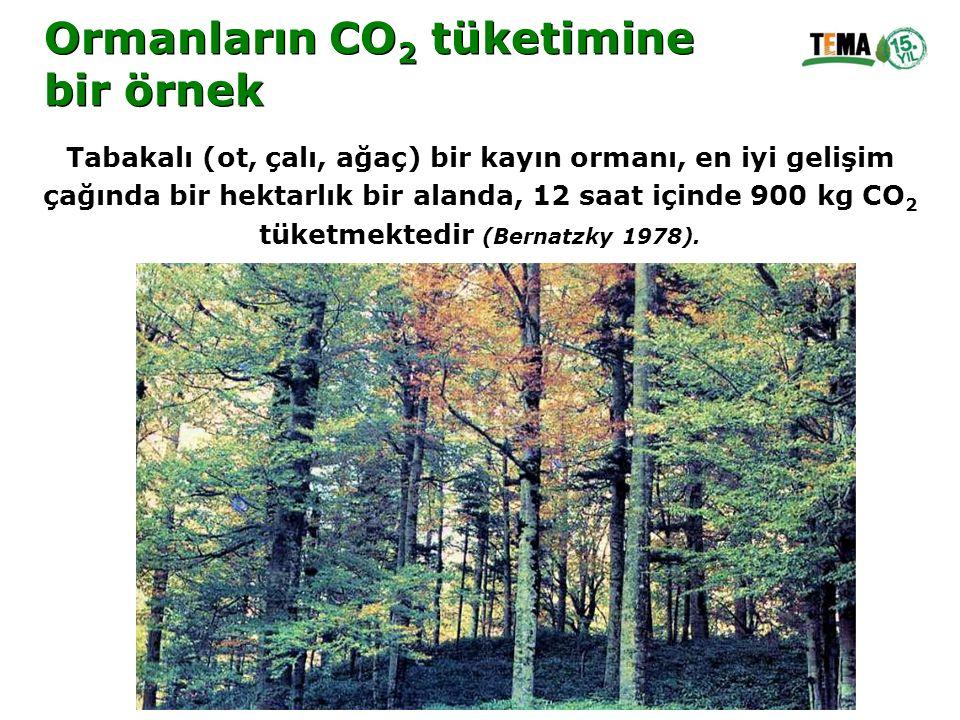 Ormanların CO 2 tüketimine bir örnek Ormanların CO 2 tüketimine bir örnek Tabakalı (ot, çalı, ağaç) bir kayın ormanı, en iyi gelişim çağında bir hekta