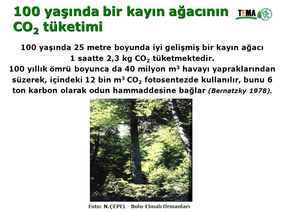 100 yaşında bir kayın ağacının CO 2 tüketimi 100 yaşında bir kayın ağacının CO 2 tüketimi 100 yaşında 25 metre boyunda iyi gelişmiş bir kayın ağacı 1