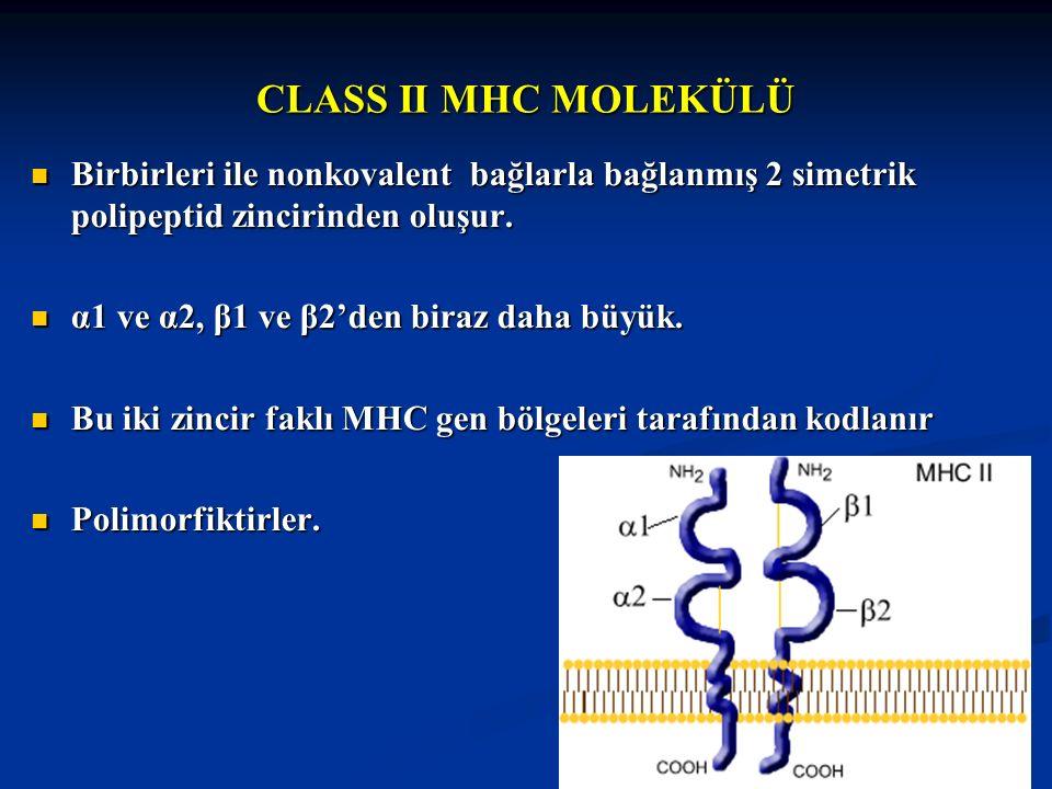 CLASS II MHC MOLEKÜLÜ Birbirleri ile nonkovalent bağlarla bağlanmış 2 simetrik polipeptid zincirinden oluşur. Birbirleri ile nonkovalent bağlarla bağl