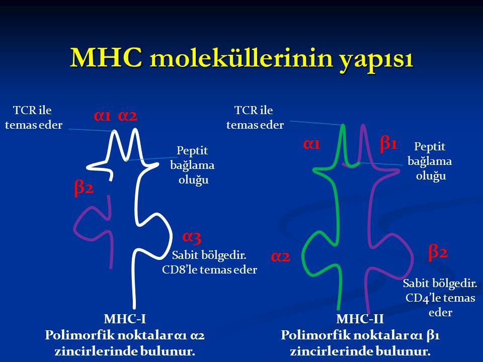 MHC moleküllerinin yapısı Peptit bağlama oluğu α1α1α2α2 α3α3 β2β2 Peptit bağlama oluğu α1α1 α2α2 β2β2 β1β1 MHC-I Polimorfik noktalar α1 α2 zincirlerin