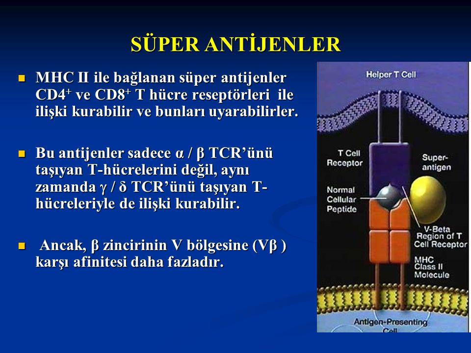 SÜPER ANTİJENLER MHC II ile bağlanan süper antijenler CD4 + ve CD8 + T hücre reseptörleri ile ilişki kurabilir ve bunları uyarabilirler. MHC II ile ba