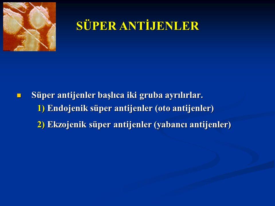 SÜPER ANTİJENLER Süper antijenler başlıca iki gruba ayrılırlar. Süper antijenler başlıca iki gruba ayrılırlar. 1) Endojenik süper antijenler (oto anti