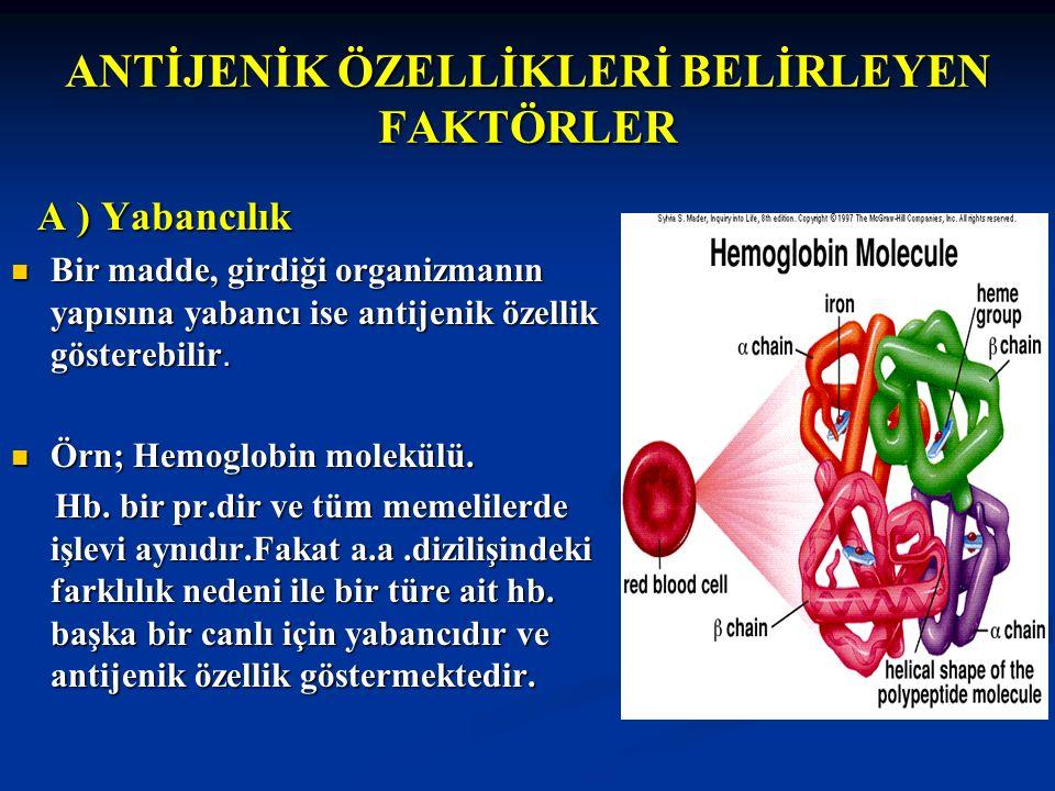 ANTİJENİK ÖZELLİKLERİ BELİRLEYEN FAKTÖRLER A ) Yabancılık A ) Yabancılık Bir madde, girdiği organizmanın yapısına yabancı ise antijenik özellik göster