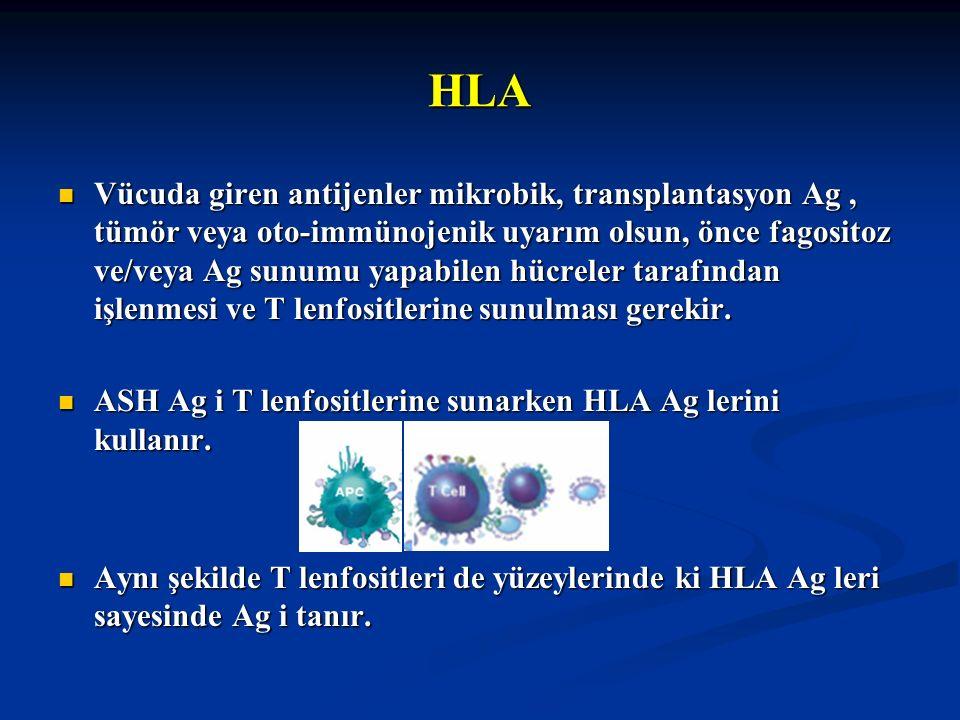 HLA Vücuda giren antijenler mikrobik, transplantasyon Ag, tümör veya oto-immünojenik uyarım olsun, önce fagositoz ve/veya Ag sunumu yapabilen hücreler