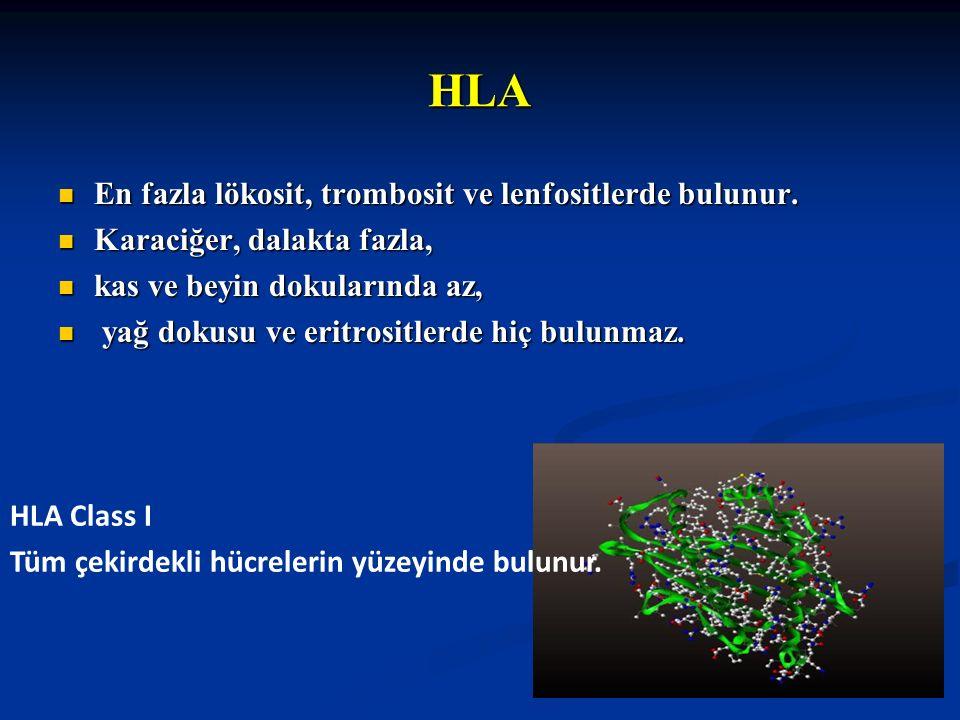 HLA En fazla lökosit, trombosit ve lenfositlerde bulunur. En fazla lökosit, trombosit ve lenfositlerde bulunur. Karaciğer, dalakta fazla, Karaciğer, d