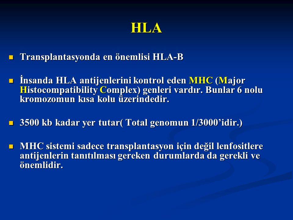 HLA Transplantasyonda en önemlisi HLA-B Transplantasyonda en önemlisi HLA-B İnsanda HLA antijenlerini kontrol eden MHC (Major Histocompatibility Compl