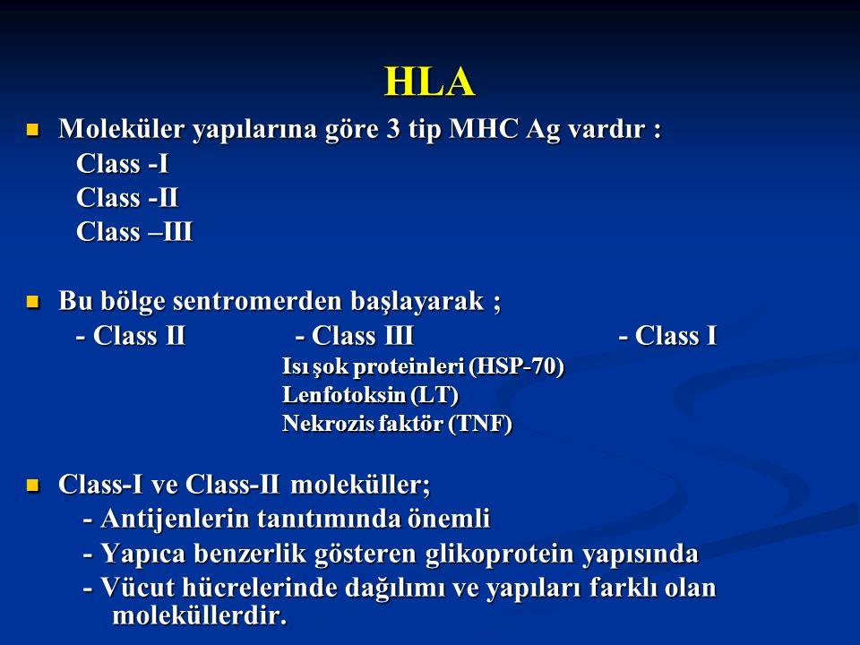 HLA Moleküler yapılarına göre 3 tip MHC Ag vardır : Moleküler yapılarına göre 3 tip MHC Ag vardır : Class -I Class -I Class -II Class -II Class –III C