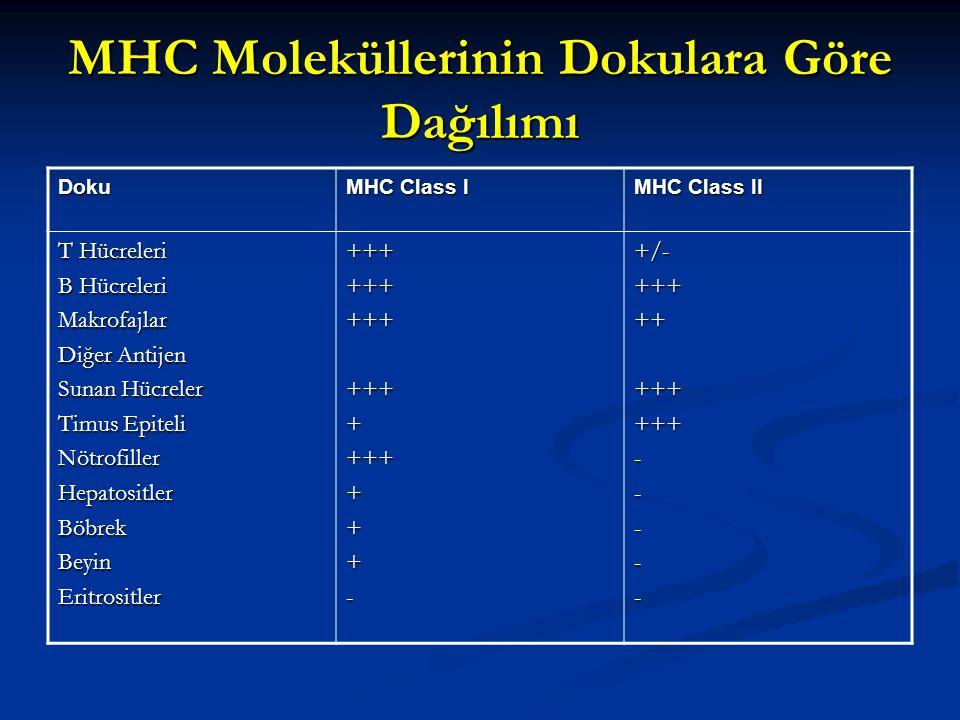 MHC Moleküllerinin Dokulara Göre Dağılımı Doku MHC Class I MHC Class II T Hücreleri B Hücreleri Makrofajlar Diğer Antijen Sunan Hücreler Timus Epiteli