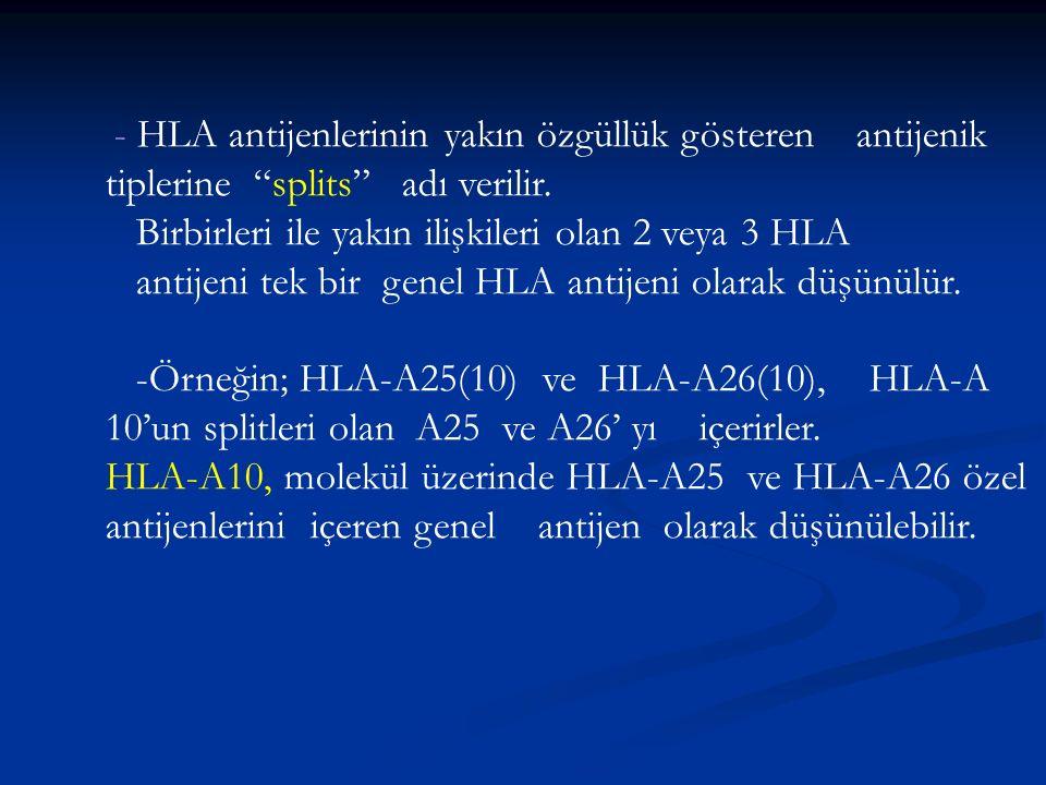 """- HLA antijenlerinin yakın özgüllük gösteren antijenik tiplerine """"splits"""" adı verilir. Birbirleri ile yakın ilişkileri olan 2 veya 3 HLA antijeni tek"""