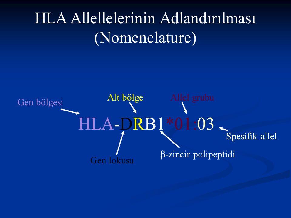 HLA Allellelerinin Adlandırılması (Nomenclature) HLA-DRB1*01:03 Gen bölgesi Gen lokusu Alt bölge  -zincir polipeptidi Allel grubu Spesifik allel