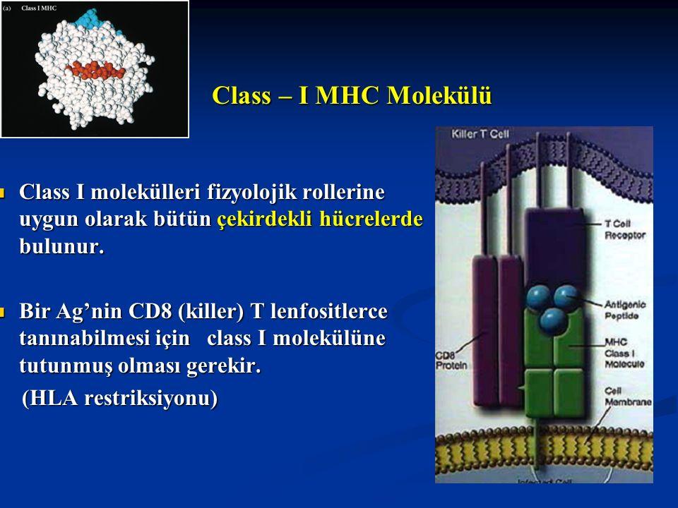 Class – I MHC Molekülü Class – I MHC Molekülü Class I molekülleri fizyolojik rollerine uygun olarak bütün çekirdekli hücrelerde bulunur. Class I molek