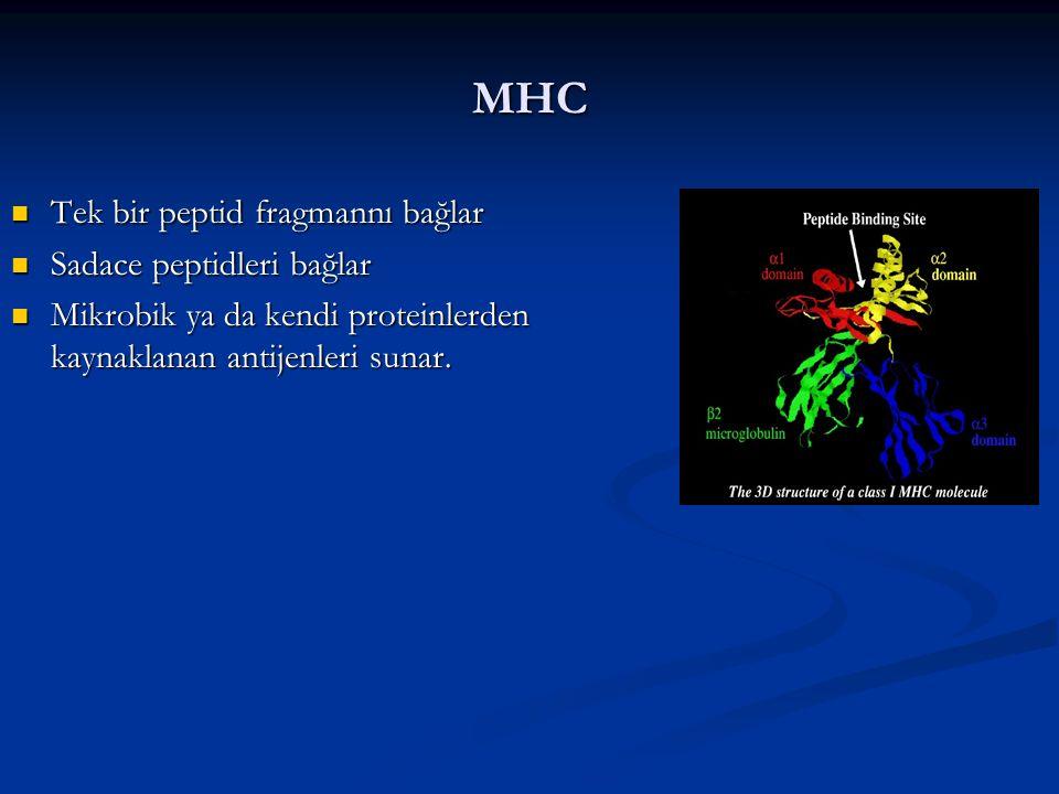 MHC Tek bir peptid fragmannı bağlar Tek bir peptid fragmannı bağlar Sadace peptidleri bağlar Sadace peptidleri bağlar Mikrobik ya da kendi proteinlerd