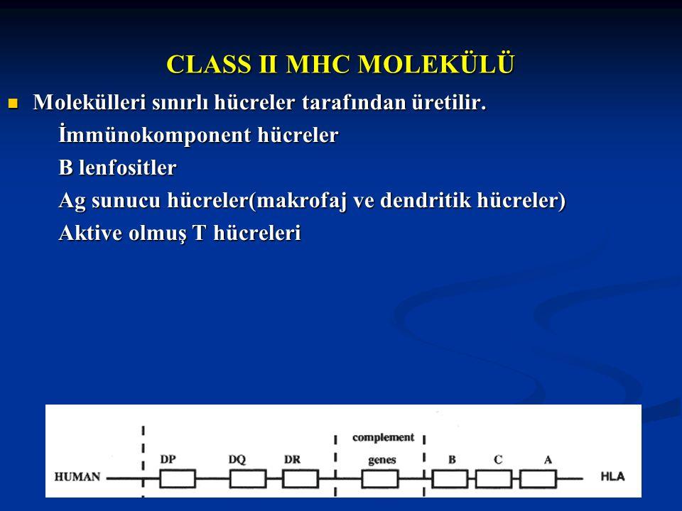 CLASS II MHC MOLEKÜLÜ Molekülleri sınırlı hücreler tarafından üretilir. Molekülleri sınırlı hücreler tarafından üretilir. İmmünokomponent hücreler İmm