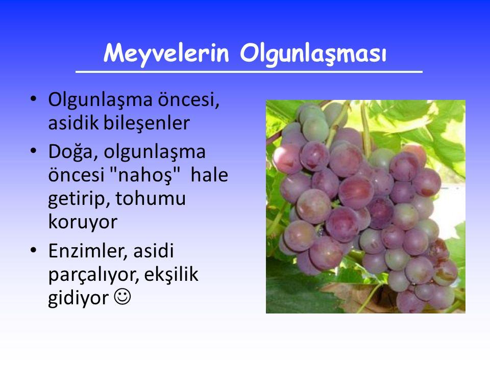 Meyvelerin Olgunlaşması Olgunlaşma öncesi, asidik bileşenler Doğa, olgunlaşma öncesi