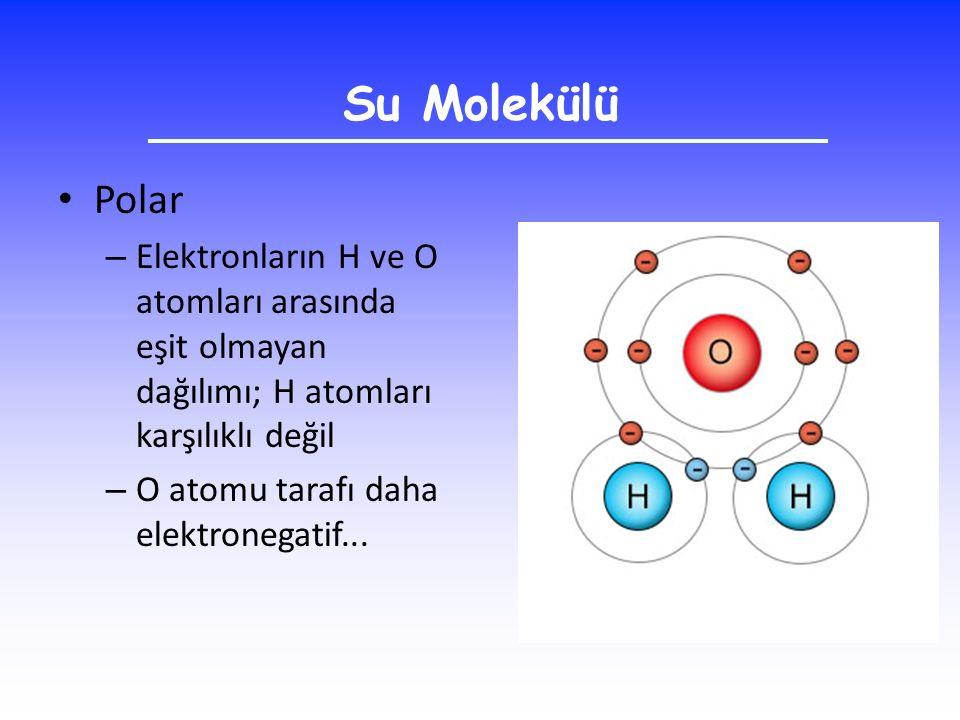 Su Molekülü Polar – Elektronların H ve O atomları arasında eşit olmayan dağılımı; H atomları karşılıklı değil – O atomu tarafı daha elektronegatif...