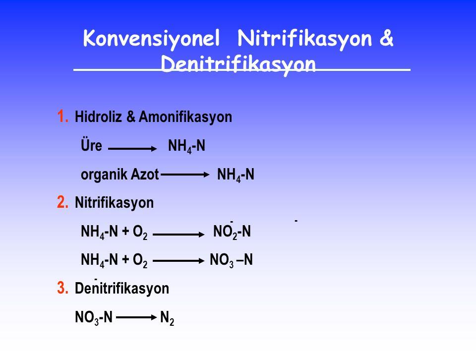 1. Hidroliz & Amonifikasyon Üre NH 4 -N organik Azot NH 4 -N 2. Nitrifikasyon NH 4 -N + O 2 NO 2 -N NH 4 -N + O 2 NO 3 –N 3. Denitrifikasyon NO 3 -N N