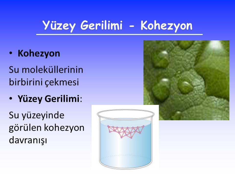 Yüzey Gerilimi - Kohezyon Kohezyon Su moleküllerinin birbirini çekmesi Yüzey Gerilimi: Su yüzeyinde görülen kohezyon davranışı