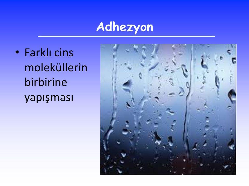 Adhezyon Farklı cins moleküllerin birbirine yapışması