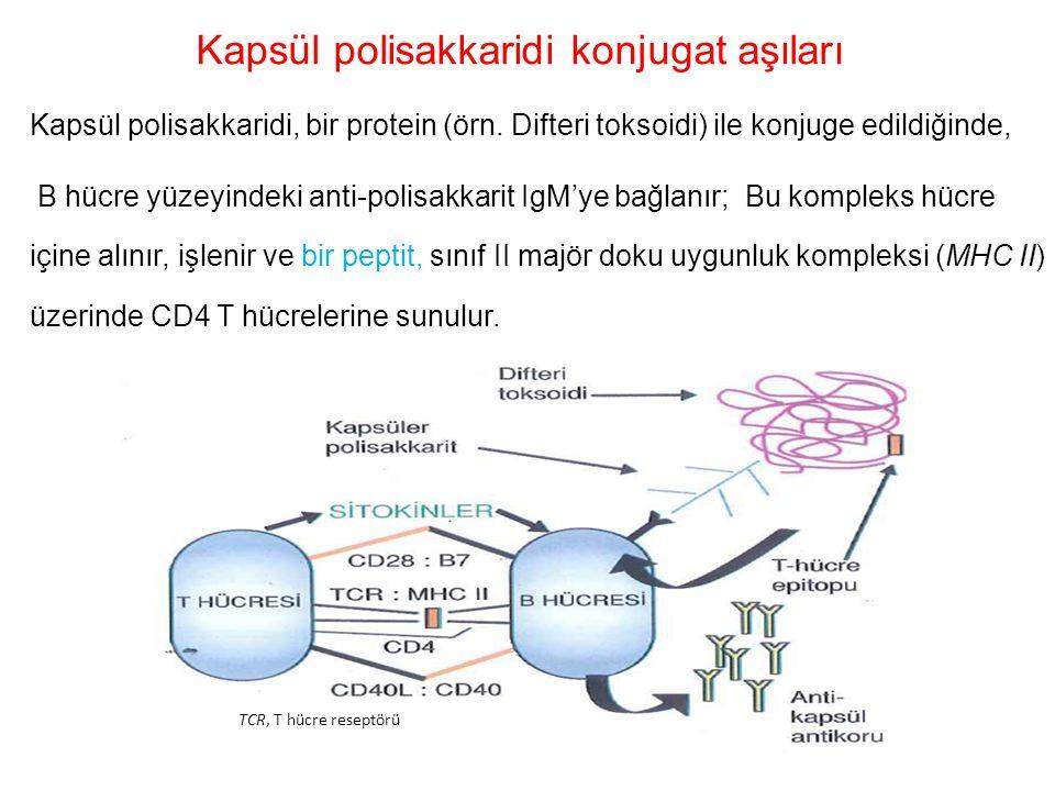 Kapsül polisakkaridi konjugat aşıları Kapsül polisakkaridi, bir protein (örn. Difteri toksoidi) ile konjuge edildiğinde, B hücre yüzeyindeki anti-poli