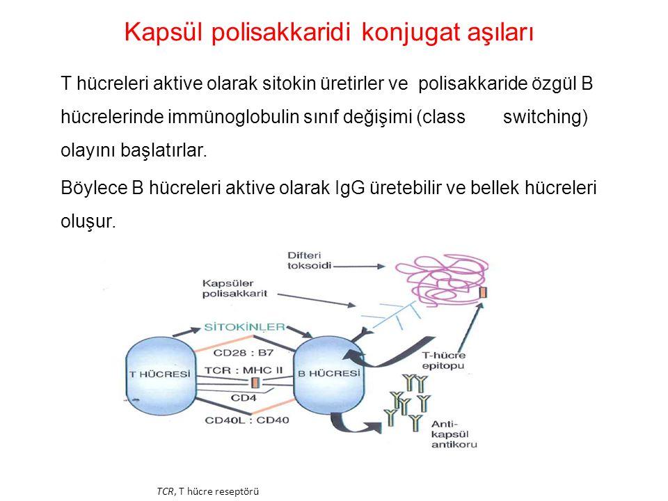 Kapsül polisakkaridi konjugat aşıları T hücreleri aktive olarak sitokin üretirler ve polisakkaride özgül B hücrelerinde immünoglobulin sınıf değişimi