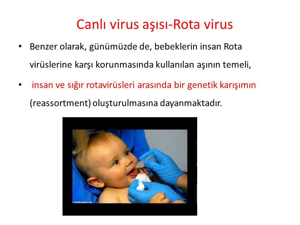 Benzer olarak, günümüzde de, bebeklerin insan Rota virüslerine karşı korunmasında kullanılan aşının temeli, insan ve sığır rotavirüsleri arasında bir
