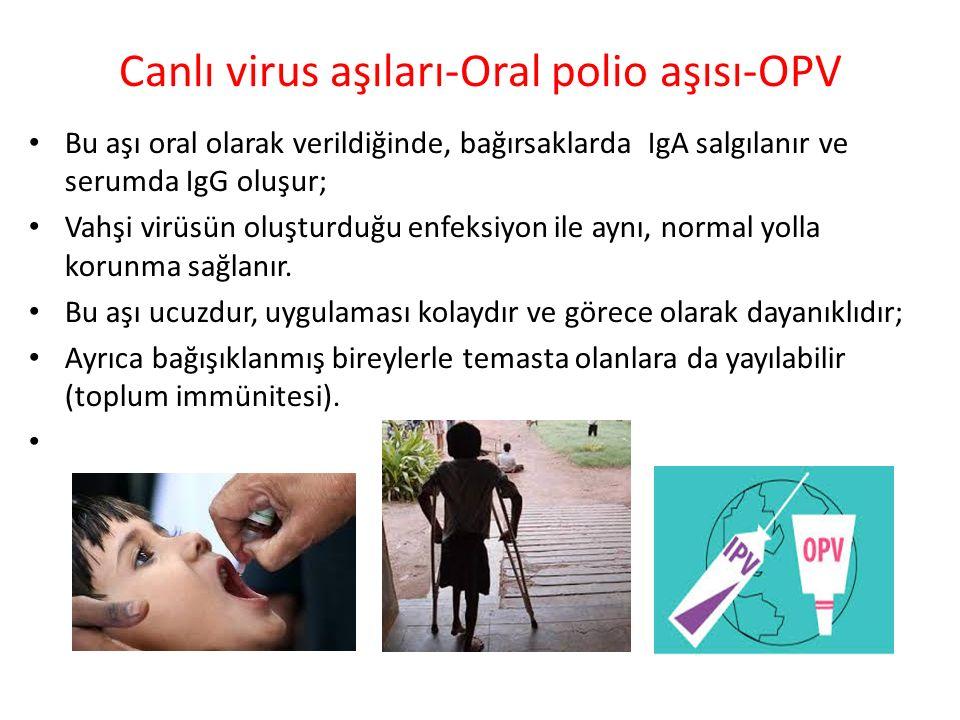 Canlı virus aşıları-Oral polio aşısı-OPV Bu aşı oral olarak verildiğinde, bağırsaklarda IgA salgılanır ve serumda IgG oluşur; Vahşi virüsün oluşturduğ