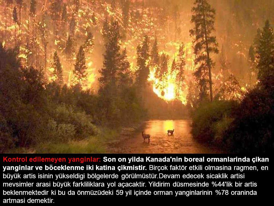 Kontrol edilemeyen yanginlar: Son on yilda Kanada'nin boreal ormanlarinda çikan yanginlar ve böceklenme iki katina çikmistir. Birçok faktör etkili olm